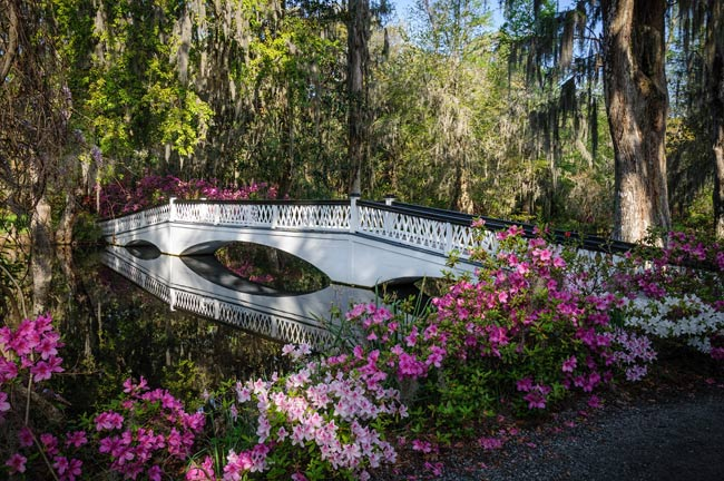 magnolia plantation long bridge