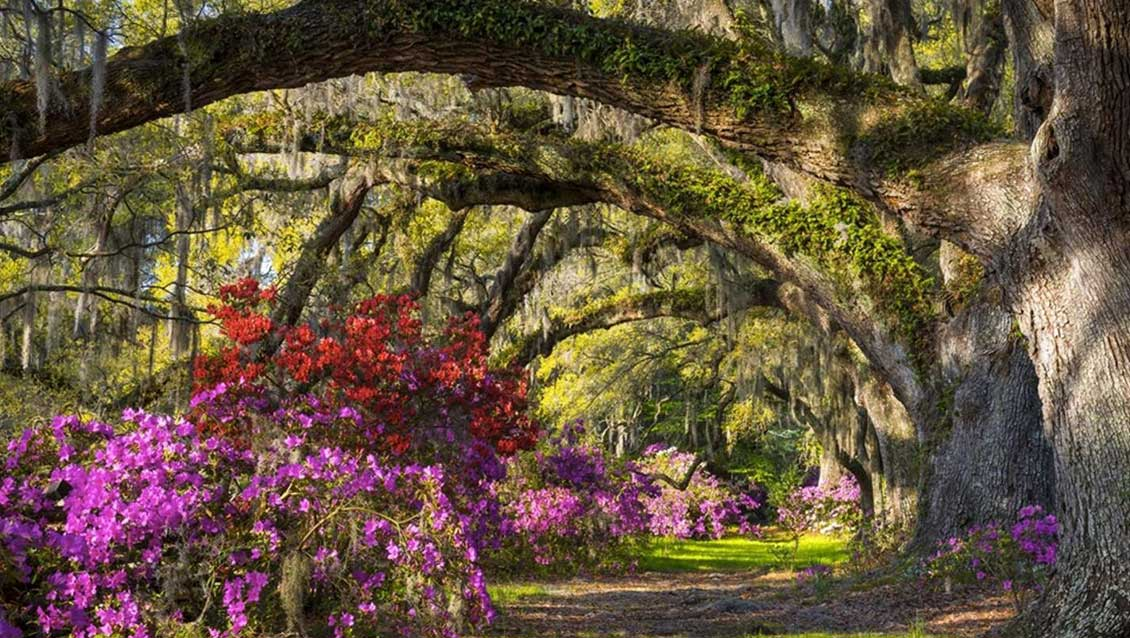 plantationguidemagnolia Top Five Wedding Venues in Charleston